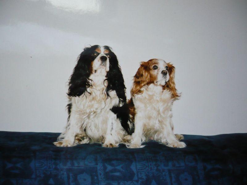 Bernik + Andyk (vpravo)