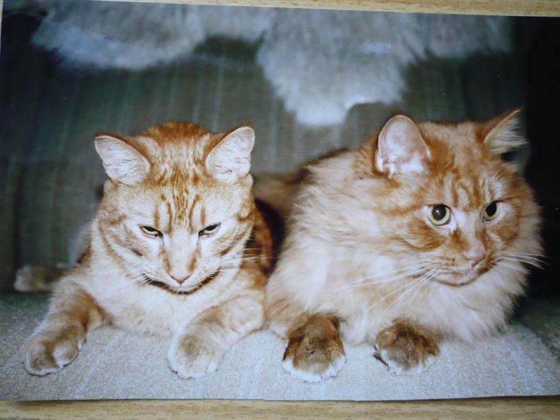 Viktor + Mates (vpravo)